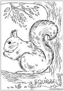 squirrel_colouring_page_1_460
